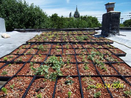 "gr2.jpg. I found Yeshwant's ""DIY Green Roof"" ..."