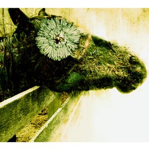 let-yourself-bloom_medium.jpg