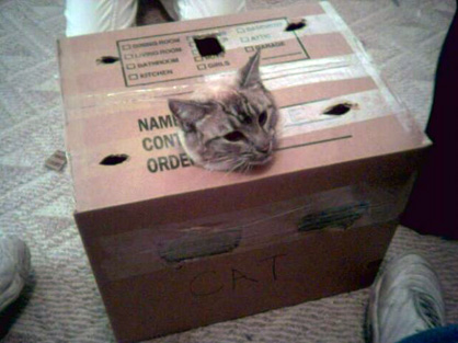 95389_Cat-Stuck-in-Moving-Box_620